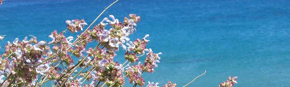 Salbei Insel Kythira
